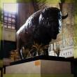 BCT Buffalo